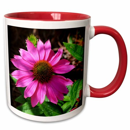 Stand Alone Photo - 3dRose Stand Alone Coneflower is a photo of a single pink coneflower - Two Tone Red Mug, 11-ounce