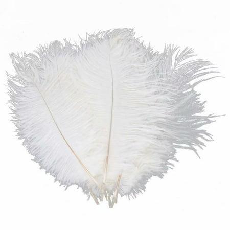 10 PCS Natural Exquisite Ostrich Feather 20-25cm White Color