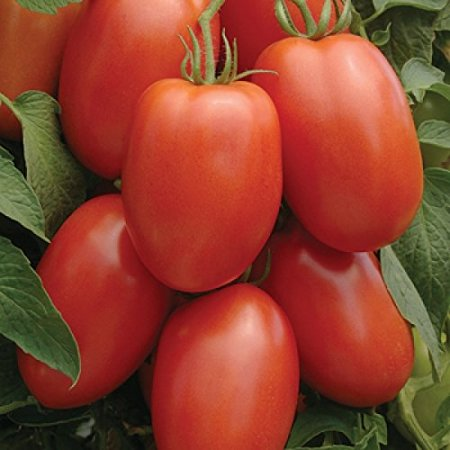 Tomato Roma Great Heirloom Garden Vegetable 300 Seeds By Seed (Black Krim Heirloom Tomato)