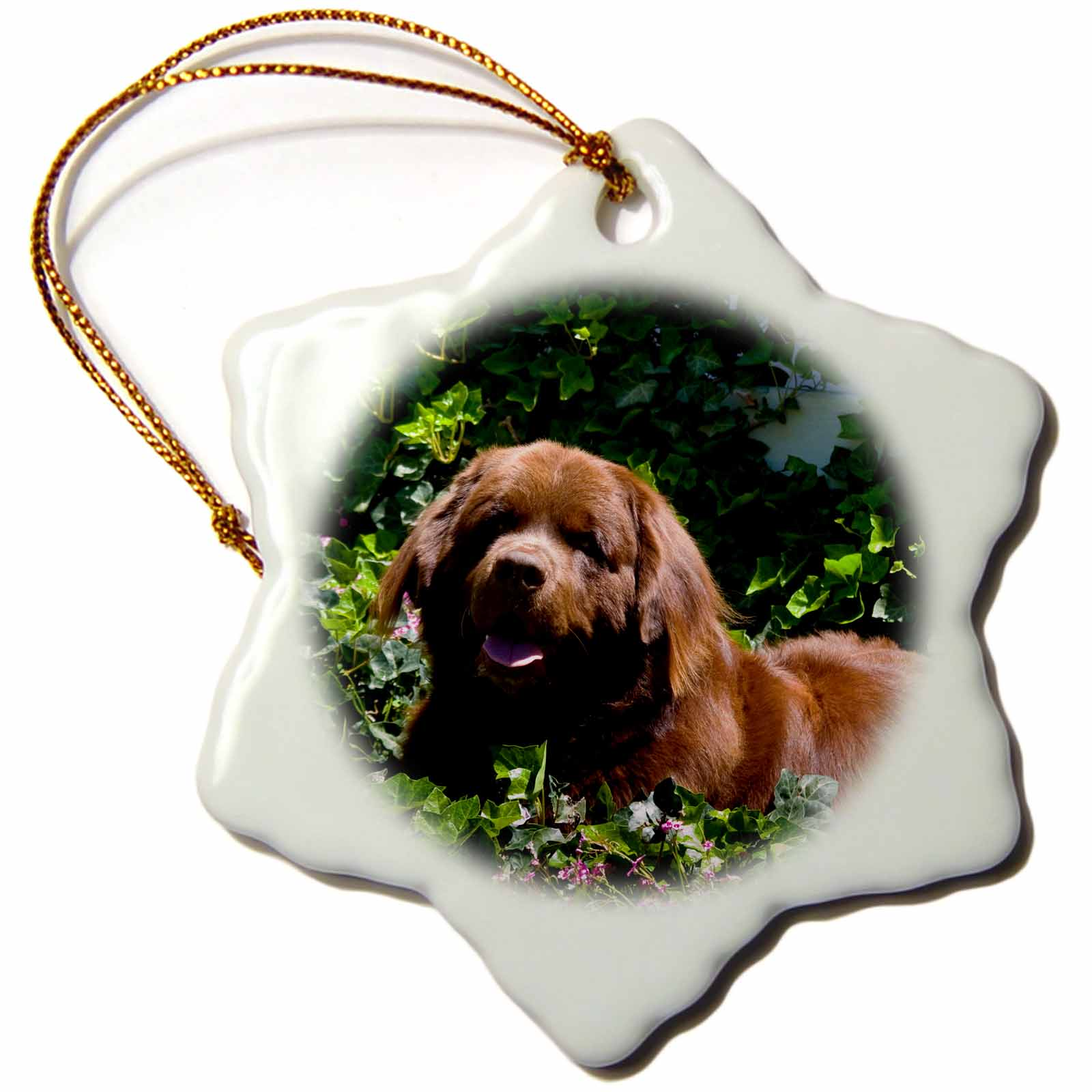3dRose USA, California. Newfoundland lying in ivy plants., Snowflake Ornament, Porcelain, 3-inch