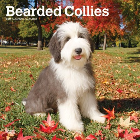 2019 Bearded Collies Wall Calendar, by BrownTrout