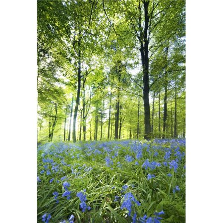 Wildflowers in a Forest of Trees Yorkshire England Poster Print by John Short, 24 x 36 - Large - image 1 of 1