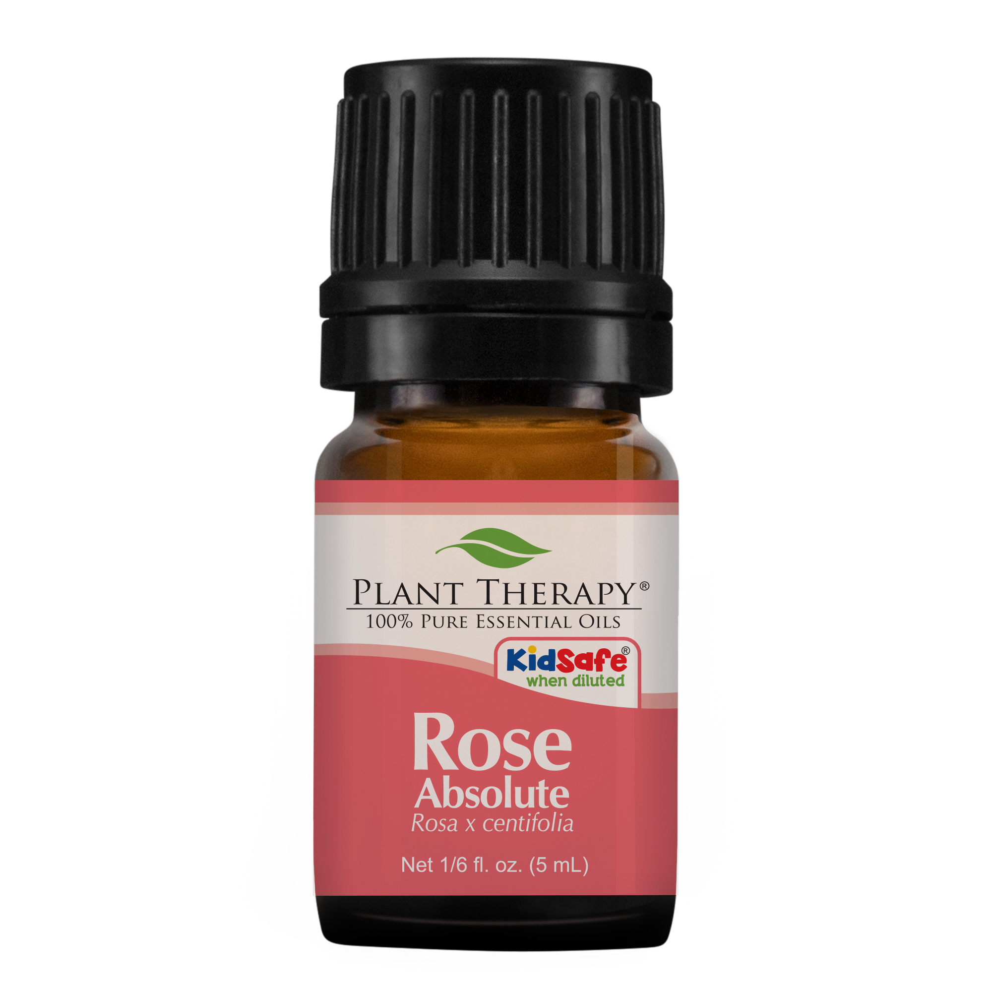 Plant Therapy Rose Absolute Essential Oil | 100% Pure, Undiluted, Natural Aromatherapy | 5 mL