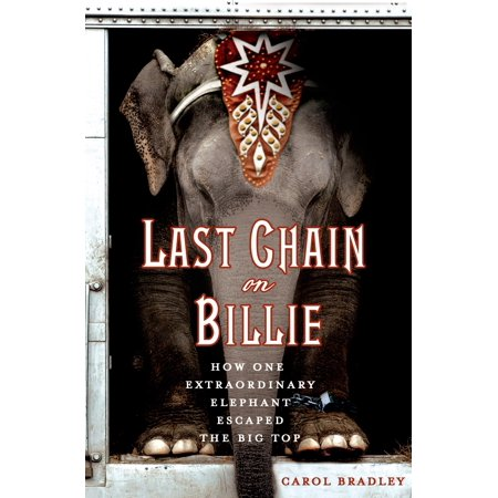 Last Chain On Billie : How One Extraordinary Elephant Escaped the Big Top (Brille English)