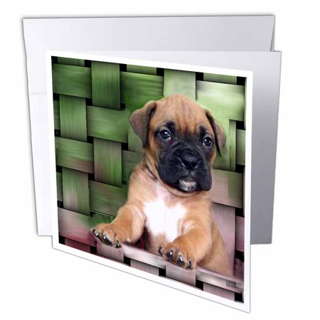 Brindle Boxer Puppy (3dRose Brindle Boxer Puppy, Greeting Cards, 6 x 6 inches, set of 12)
