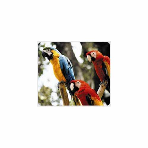 Macaw Parrot Mouse Pad - MA13514