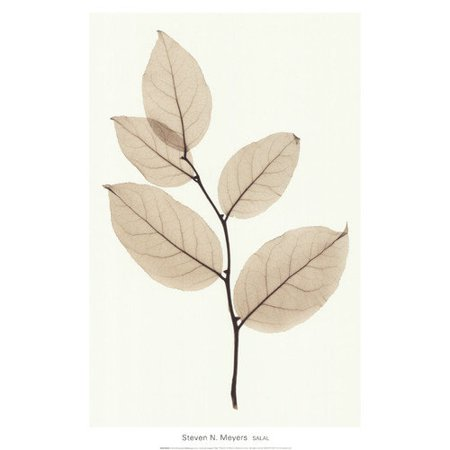 Evive Designs Salal Art by Steven N. Meyers Photographic Print