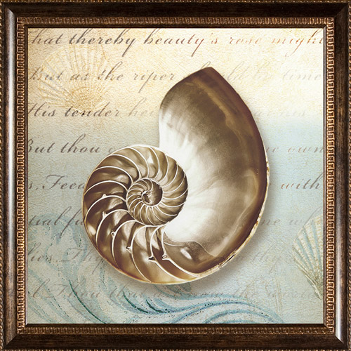 Pro Tour Memorabilia Seashell Framed Artwork by Pro Tour Memorabilia