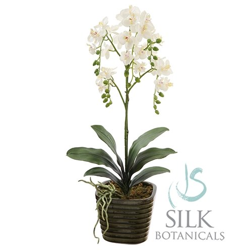 Jane Seymour Botanicals Potted Orchid Flower in Pot