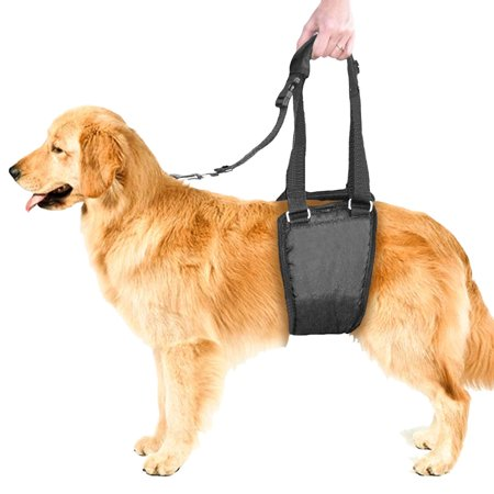 Dog Sling Lift, Support and Rehabilitation Padded K9 Hind Leg Underbelly Dog Harness for Injured, Weak, Old, or Arthitic Medium Breed Dogs by CoreLife (Male / Female M - ()