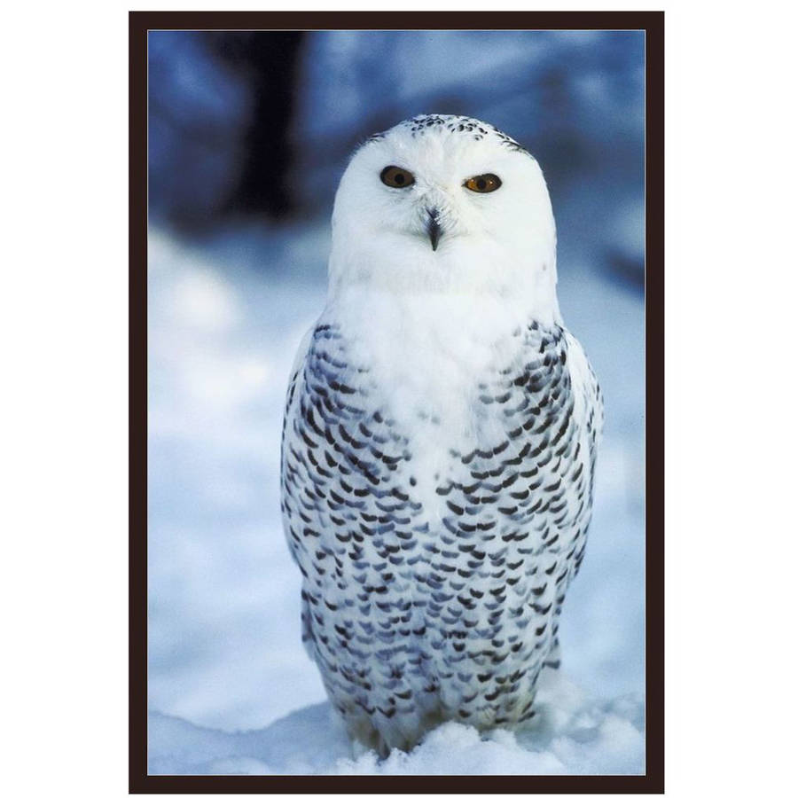 Snowy Owl by Eazl Walnut Metallic Image Box