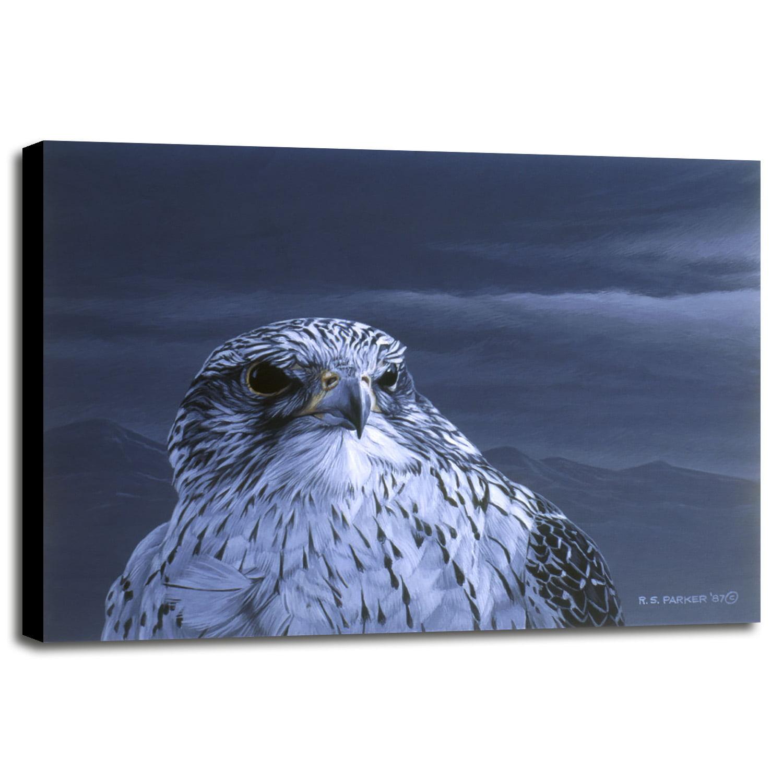 Gyr Falcon Portrait Ronpar10474 Print 16x215 By Ron Parker In A