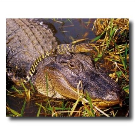 Very Cute Baby Pictures - Alligator Cute Baby On Head Wall Picture Art Print