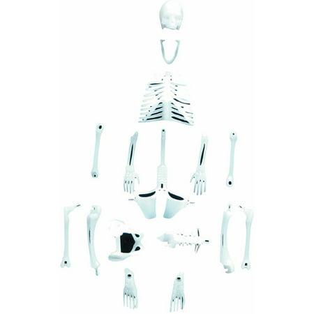 Glowing Skeleton - Glowing Human Skeleton