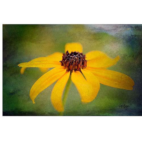 "Trademark Fine Art ""Textured Black-Eyed Susan"" Canvas Art by Lois Bryan"