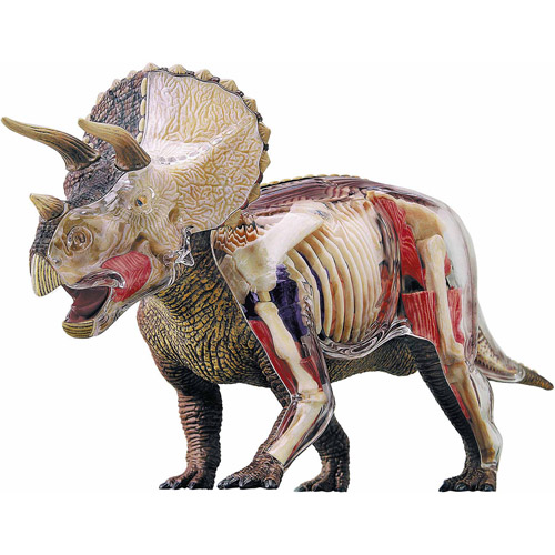 4D Triceratops Anatomy Model