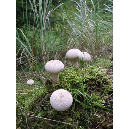 LAMINATED POSTER Forest Mushroom Group Mixed Forest Forest Floor Poster Print 24 x -