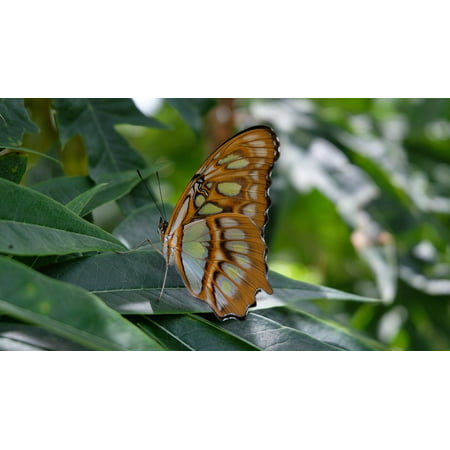 Framed Art For Your Wall Nicaragua Butterfly Sanctuary 10x13 Frame