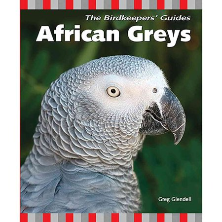 African Greys by