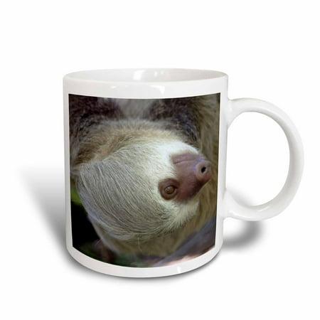 3dRose Costa Rica, Hoffmans Two-Toed Sloth wildlife - SA22 KWI0003 - Kymri Wilt, Ceramic Mug, 11-ounce