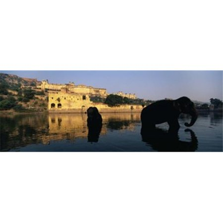 Silhouette of two elephants in a river  Amber Fort  Jaipur  Rajasthan  India Poster Print by  - 36 x 12 - image 1 de 1