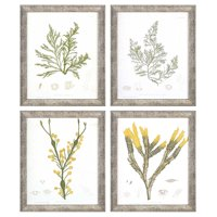 Paragon Seaweed II Framed Wall Art - Set of 4