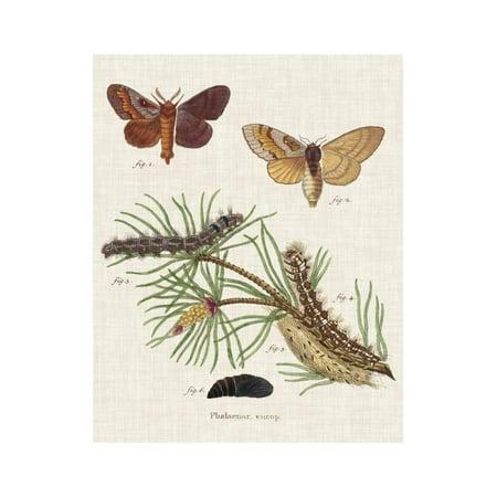Life Cycle of a Moth II Print Wall Art By Johann Esper