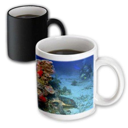 3dRose Hawksbill Turtle, Scuba Diver, Micronesia - OC16 SWS0045 - Stuart Westmorland, Magic Transforming Mug, 11oz