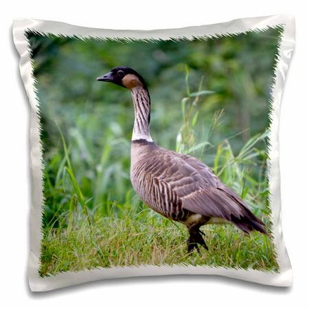 3dRose Nene Hawaiian Goose, bird, Kauai, Hawaii, USA - US12 DFR0128 - David R. Frazier - Pillow Case, 16 by 16-inch
