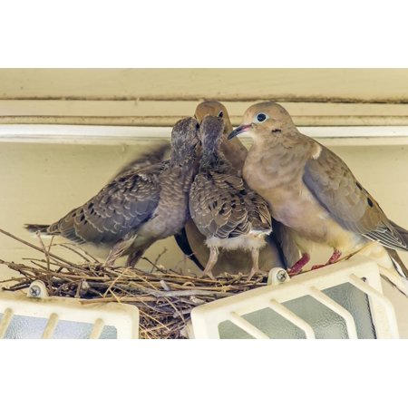 Sheltered Nesting Space and Mourning Dove Family Atop a Security Light Print Wall Art By Michael Qualls (Family Space 3 Light Pendant)