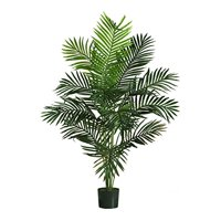 Paradise Palm Silk Tree - 5 Feet