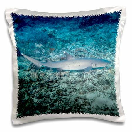 Rainbow Reef Shark - 3dRose White tip reef shark, Sipadan Island, Barracuda Point, Malaysia, Pillow Case, 16 by 16-inch