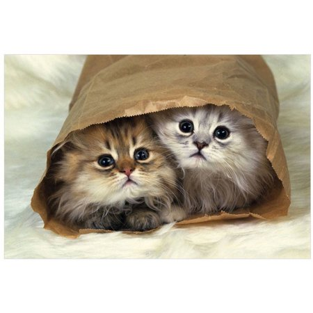 Bag Gallery (Two Persian Cats In A Little Paper Bag, Looking At Camera, High Angle View by Eazl Premium Gallery)