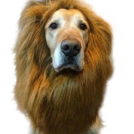 Dog In A Wig (ALYWINS Festival Fancy Dress Up Pet Costume Lions Mane Wig for Dog)