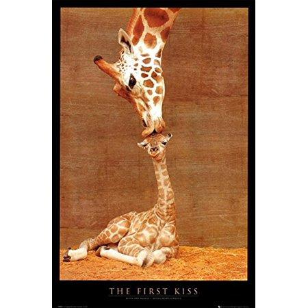 Makulu Giraffe Mother Love First Kiss by Ron DRaine 36x24 Art Print Poster Photograph