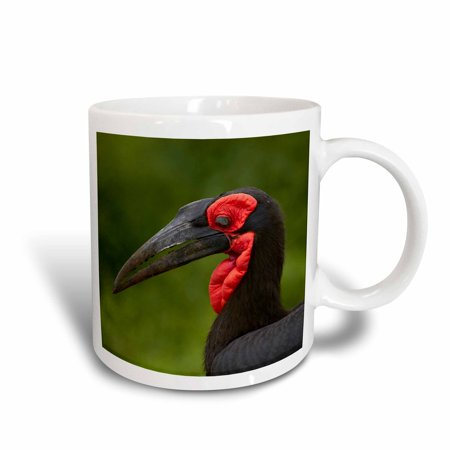 3dRose Southern Ground Hornbill, Bucorvus leadbeateri, Kruger NP,South Africa, Ceramic Mug,