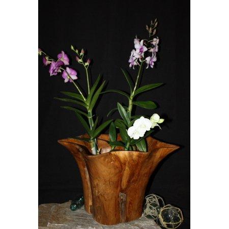 Rustic Vase Flower Wooden Teak Bowl 16 X 14 X 12 Hwa224
