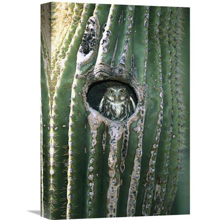 Global Gallery Ferruginous Pygmy Owl In Saguaro Cactus Altar Valley Arizona Wall Art