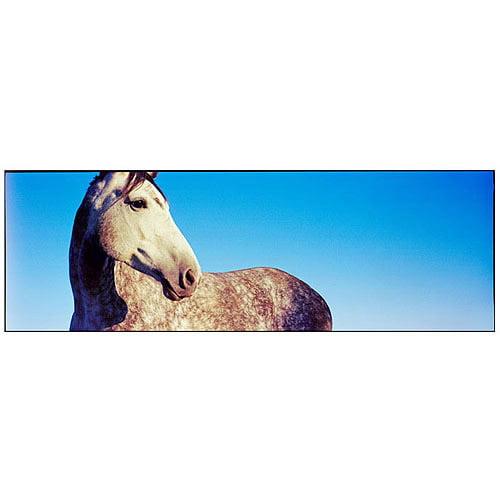 "Trademark Art ""Kentucky White Horse"" Canvas Art by Preston"