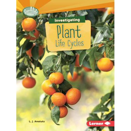Investigating Plant Life Cycles - Lifecycle Of A Plant
