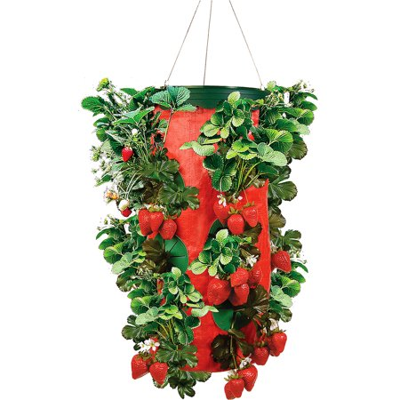 As Seen On Tv Topsy Turvy Strawberry Planter Walmartcom
