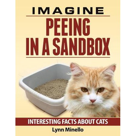 Imagine Peeing In a Sandbox - Interesting Facts About Cats -