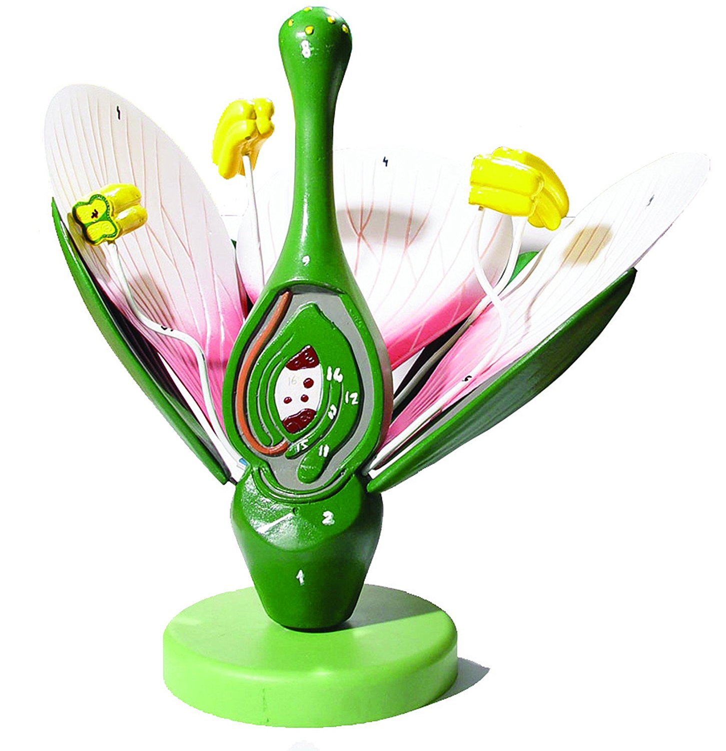 Vision Scientific Dicot Flower Model