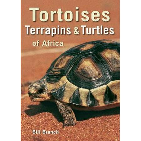 - Tortoises, Terrapins & Turtles of Africa - eBook