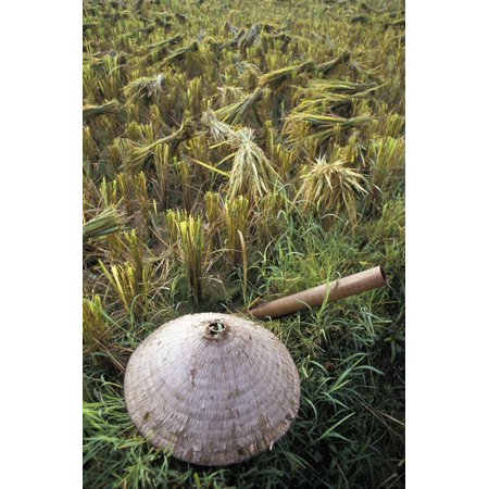 Vietnamese Conical Hat And Rice Cutting Tool In Field - Conical Hat