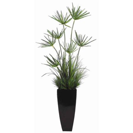 Image of 6' Mixed Cypress Grass in Tall Resin Container