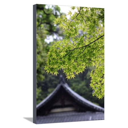 Les Paul Maple Neck - Ornately Designed Roof and Japanese Maple Leaves at the Golden Temple, Kyoto, Japan Stretched Canvas Print Wall Art By Paul Dymond