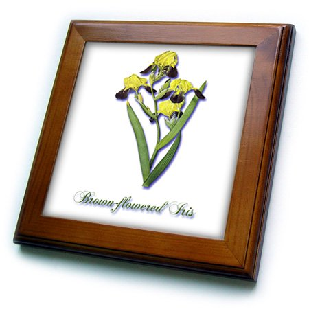 Botanical Tile - 3dRose Brown-Flowered Iris, Botanical Print of a Yellow and Brown Flowers - Framed Tile, 6 by 6-inch
