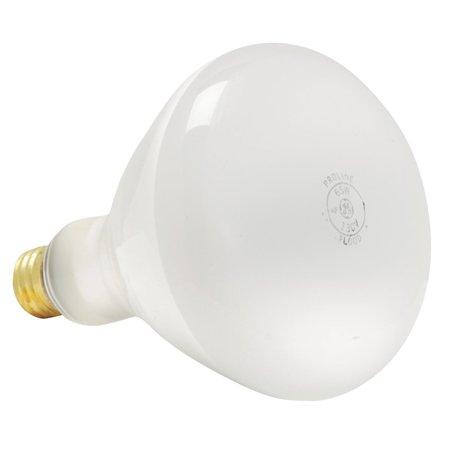 GE Proline Floodlight Light Bulb (Lightbulb Floodlight)