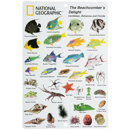 National Geographic™ The Beachcomber's Delight Caribbean, Bahamas and Florida Sea Life ID Card